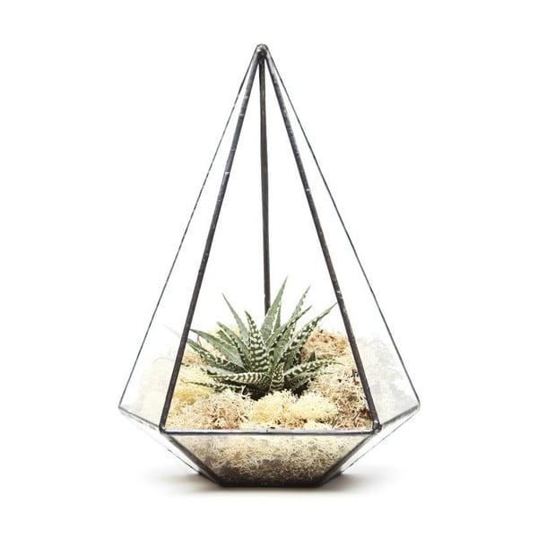 Terárium s rostlinami Urban Botanist Jewel, tmavý rám