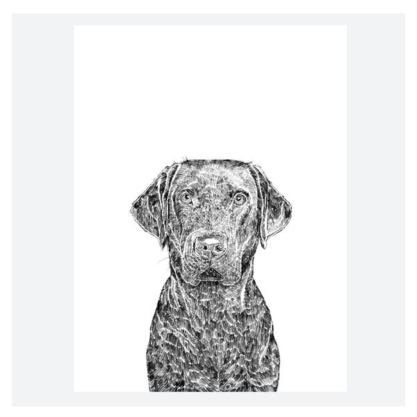 Plakát Max the Labrador, 30x40 cm