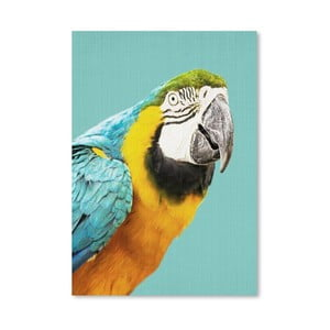 Plakát Tropical Parrot