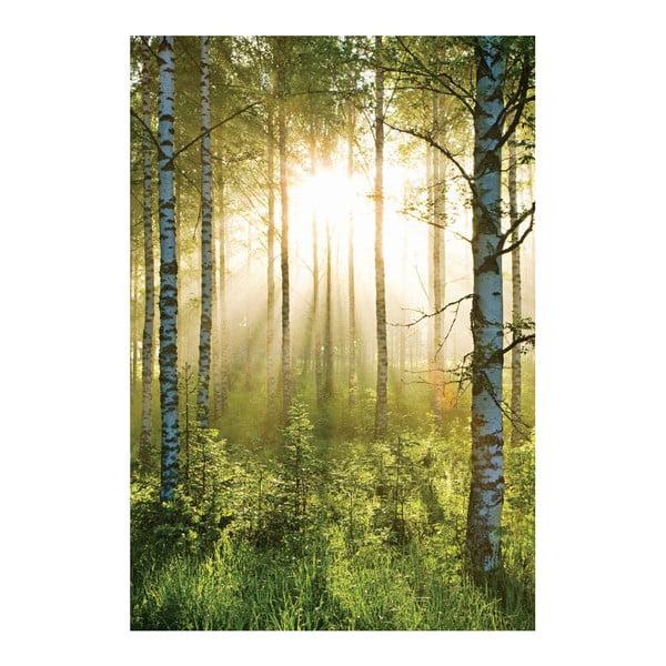 Velkoformátová tapeta Prosvětlený les, 158x232 cm