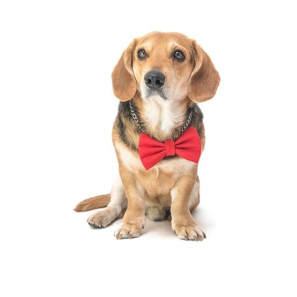 Červený charitativní psí motýlek Funky Dog Bow Ties, vel. L