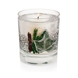 Svíčka Botanical 15 hodin hoření, bříza bělokorá