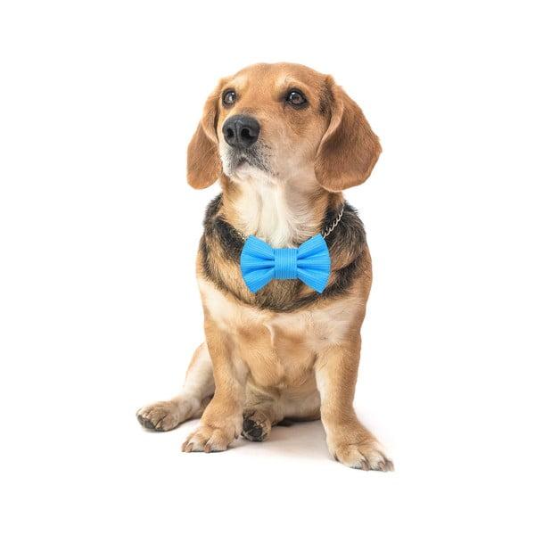 Tyrkysový charitativní psí motýlek Funky Dog Bow Ties, vel. L
