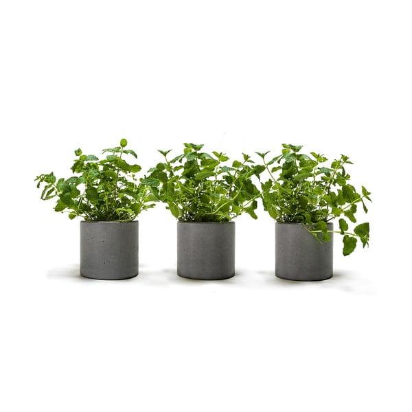 Set 3 betonových květináčů Spicepot 12