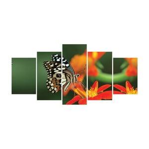 Vícedílný obraz La Maison Des Couleurs Butterfly