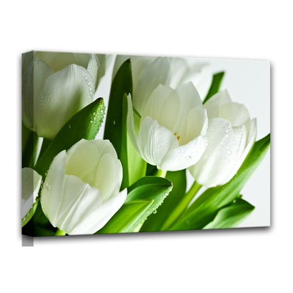 Obraz Styler Canvas White Tulips, 60 x 80 cm