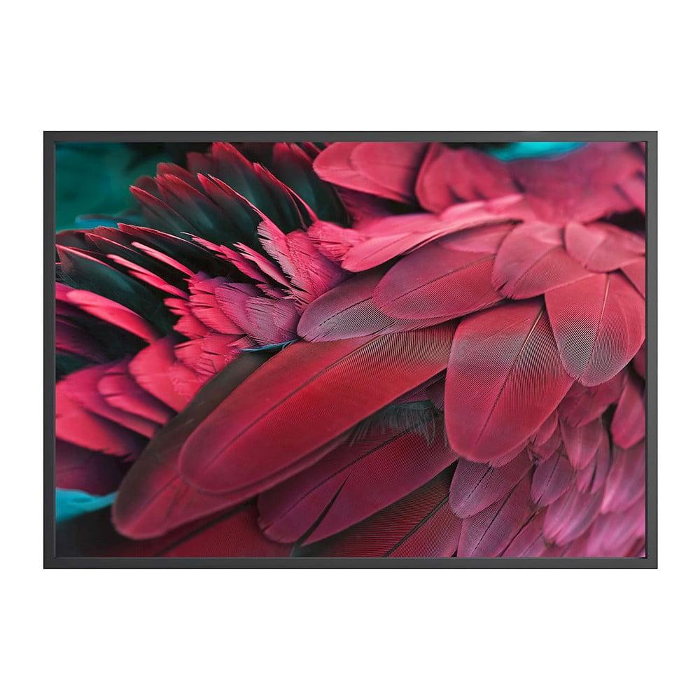 Plakát DecoKing Feathers Red, 70 x 50 cm
