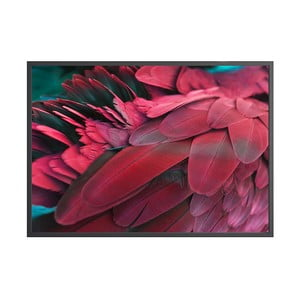 Poster DecoKing Feathers Red, 70 x 50 cm