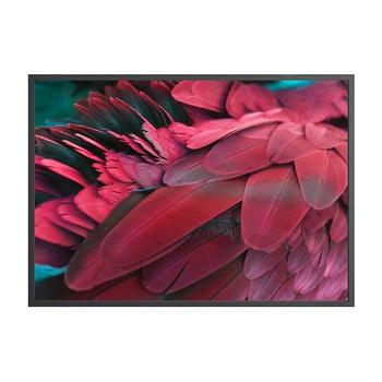 Poster DecoKing Feathers Red, 100 x 70 cm de la DecoKing