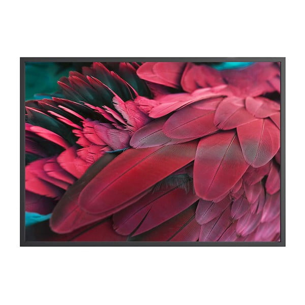 Plakat DecoKing Feathers Red, 70x50 cm