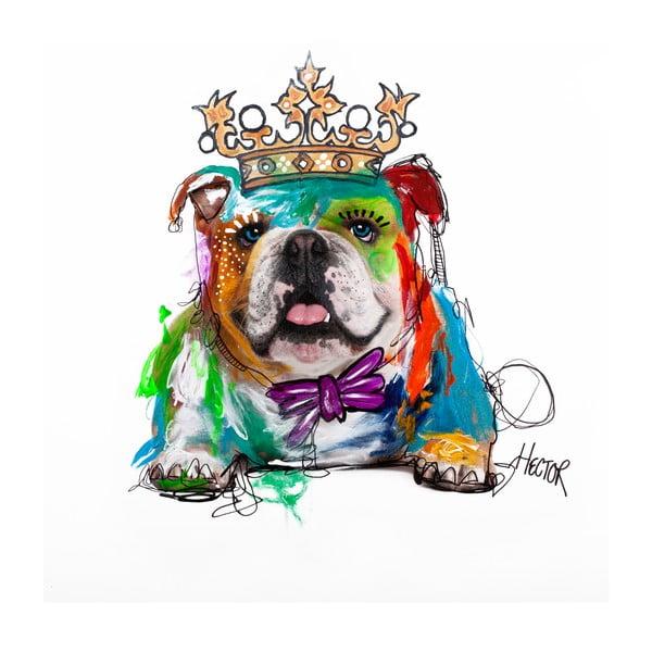 Hector Bulldog, 70x70 cm