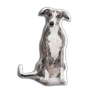 Pernă Greyhound