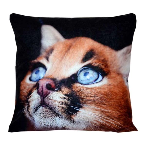 Polštář Animals Cat, 42x42 cm