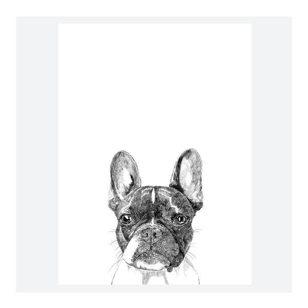 Plakát Murphy The Boston Terrier, 30x40 cm