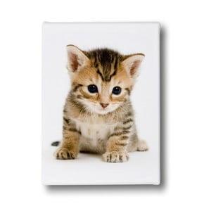 Obraz Mr. Little Fox Fluffy Kitty