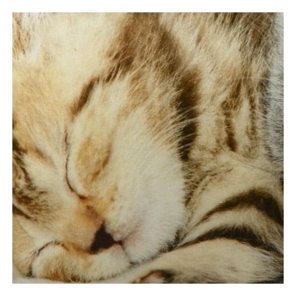 Polštář Kittens On Blanket 50x35 cm