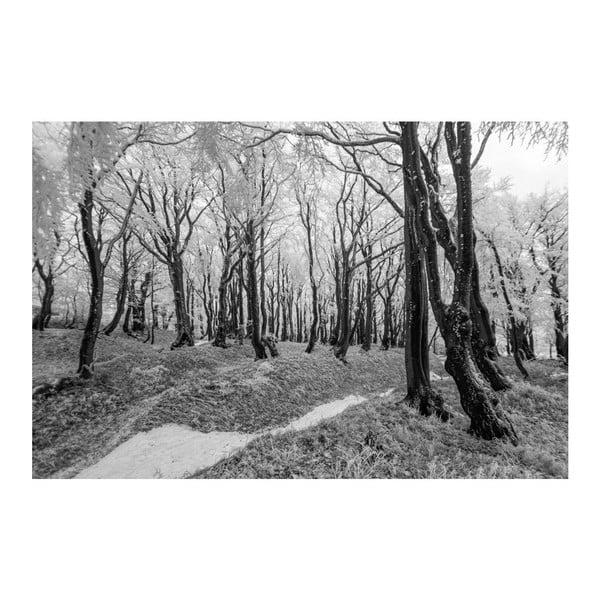 Fotografie Mráz, limitovaná edice fotografa Petra Hricka, formát A1