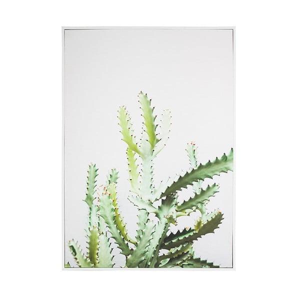 Nástěnný obraz SantiagoPons Plants Cactus, 69x97cm