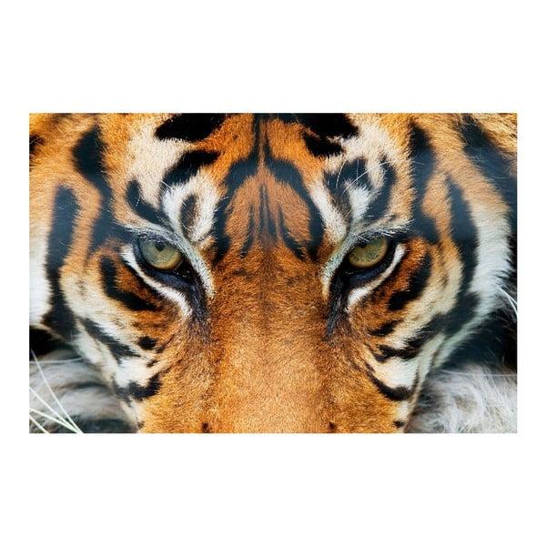 Maxi plakát Tiger, 175x115 cm