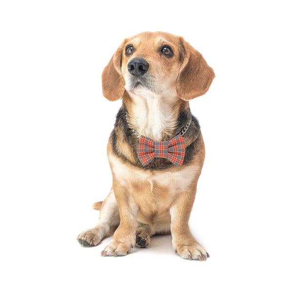 Oranžový károvaný charitativní psí motýlek Funky Dog Bow Ties, vel. L