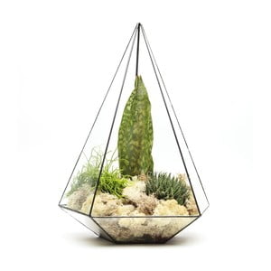 Terárium s rostlinami Urban Botanist Super Aztec Jewel, tmavý rám