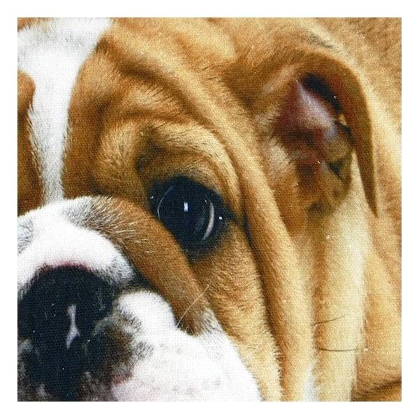 Polštář Mars&More Bulldog, 50x50 cm