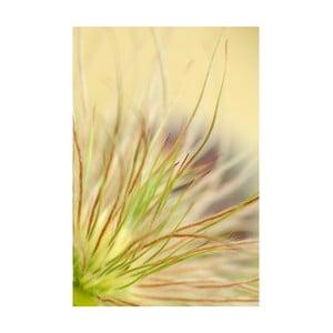 Fotoobraz Detail květu, 40x60 cm, exkluzivni edice