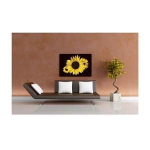 Obraz Sun Flower, 40x60 cm