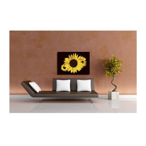 Obraz Sun Flower, 60x80 cm