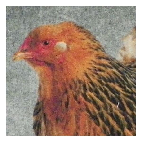 Předložka Grey Chicken 75x50 cm