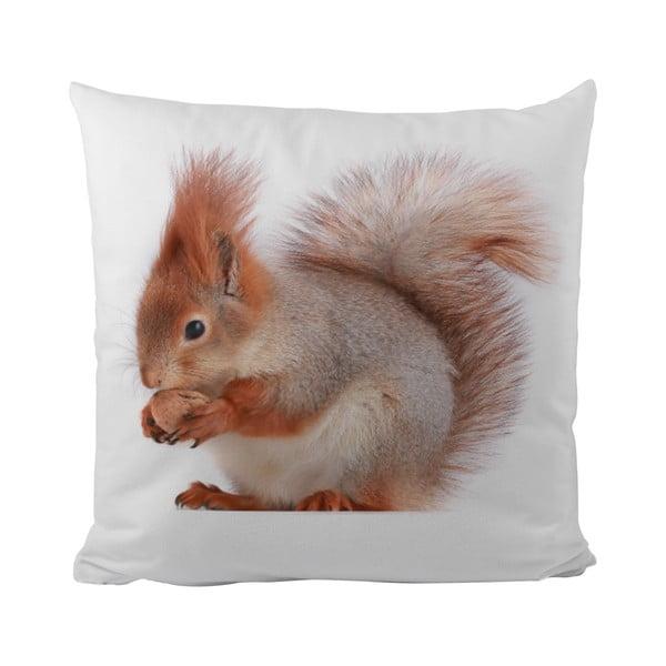 Polštář This Squirrel, 50x50 cm