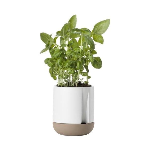Bílý kameninový květináč na bylinky Zone Herb & Sprout, výška 11,6 cm
