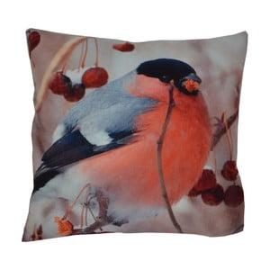 Polštář Animals Bird, 42x42 cm
