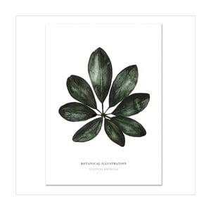 Plakát Leo La Douce Schefflera Arboricola, 21x29,7cm