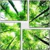4dílný obraz Natural, 70x70 cm