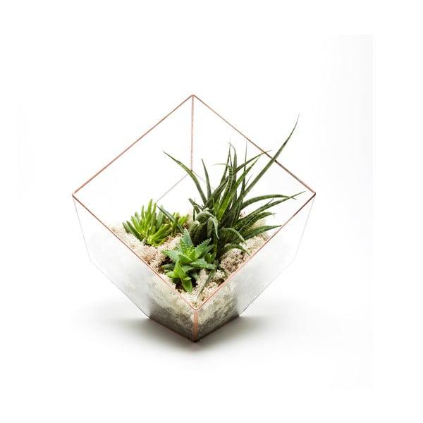 Terárium s rostlinami Urban Botanist Supersize Cube, světlý rám