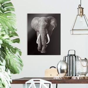 Skleněný obraz OrangeWallz Elephant, 40 x 50 cm