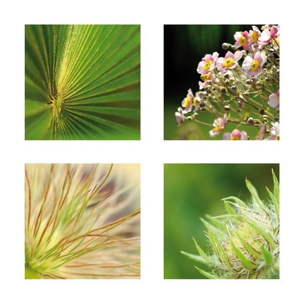 Set 4 fotoobrazů Detail, exkluzivní edice