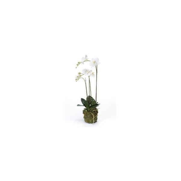 Umělá květina Orchidej Phalaenopsis, 70 cm