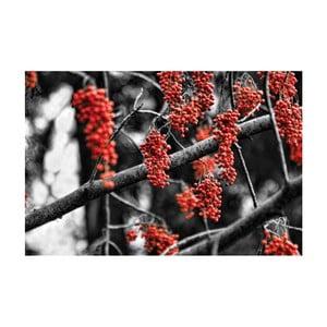 Fotoobraz Červená jeřabina, 90x60 cm