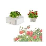 Startovací květináč Bazalka + náhradní kazeta Mini Rajčata