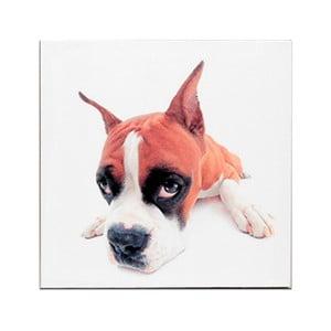 Dřevěná cedule Puppie's Eye, 30x30 cm