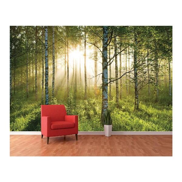 Velkoformátová tapeta Prosvětlený les, 360x253 cm