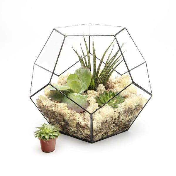 Terárium s rostlinami Urban Botanist Super Aztec Penta, tmavý rám
