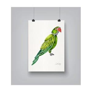 Plakát Americanflat Parrot, 30x42cm