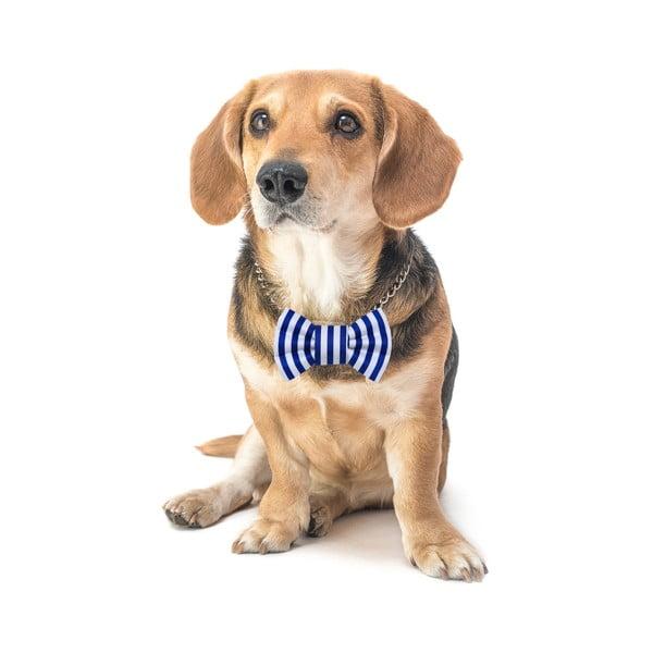 Modrý charitativní psí motýlek s proužky Funky Dog Bow Ties, vel. L