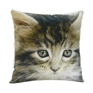 Polštář Little Cat, 45x45 cm