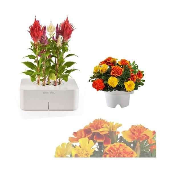 Startovací květináč Celosia + náhradní kazeta Afrikán
