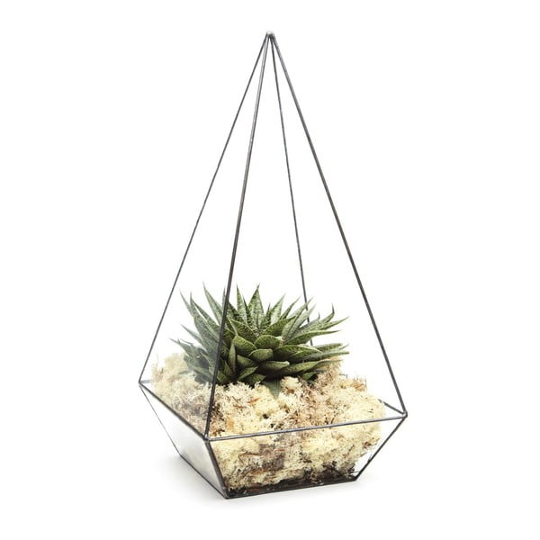 Terárium s rostlinami Urban Botanist Super Aztec Pyramid, tmavý rám