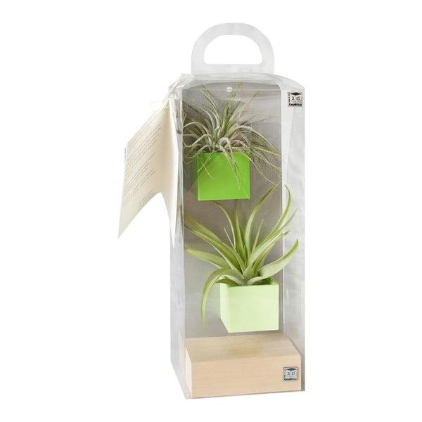 Sada 2ks malých magnetických květináčů s podstavcem a rostlinami, zelená